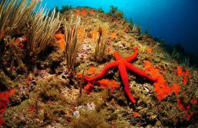 La campagne Ecogestes présente tout l'été sur le littoral méditerranéen