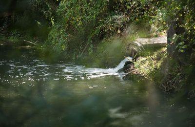 En Bretagne, une pollution de Lactalis a dévasté une rivière