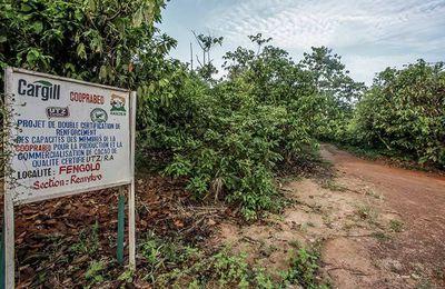 Ferrero, Mars, Nestlé : des parcs protégés rasés illégalement pour faire du chocolat
