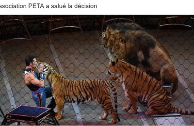 L'Irlande et l'Italie interdisent l'emploi d'animaux sauvages dans les cirques