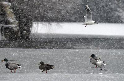 Une vague de froid polaire va s'abattre sur la France