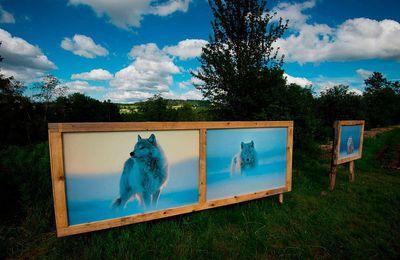 Exposition Vincent Munier sur le site de l'Etang Lallemand