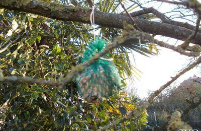 Fabriquez des boules de graisse pour les Oiseaux du Jardin