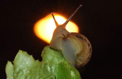 A vos agendas: 7ème fête de l'escargot au lac du Soler
