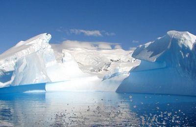 Nadar en la Antártica
