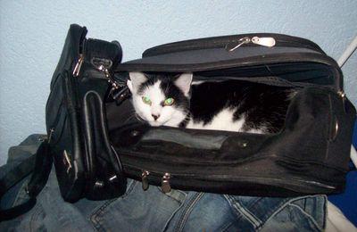 Will Lucy verreisen?