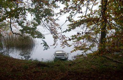 Im Nebel über den Großen Lychen-See
