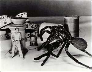 L'Homme qui rétrécit (The Incredible Shrinking Man) de Jack Arnold
