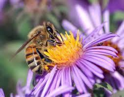 Non à la disparition des abeilles !