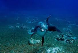Non aux delphinariums !