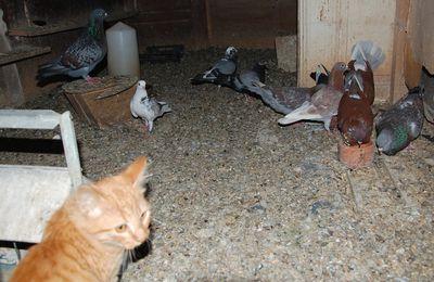 Le repas des pigeons le 21 août
