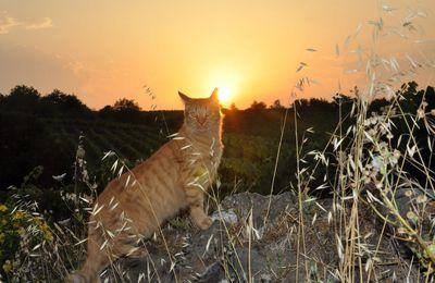 La balade du roi soleil
