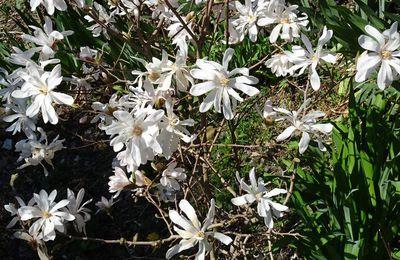 Le printemps en images