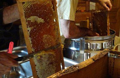 Récolte du miel de merisier