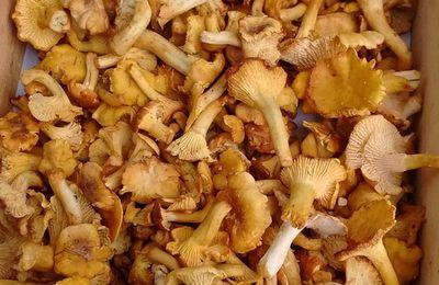 Les champignons sont de retour