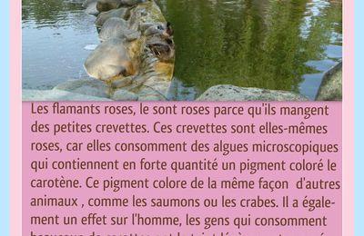 L'ALIMENTATION QUI COLORE