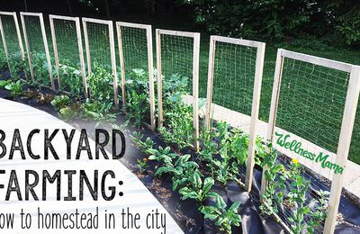 Backyard farming: how to homestead in the city