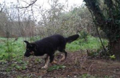 Des nouvelles des chiens rescapés de Roumanie