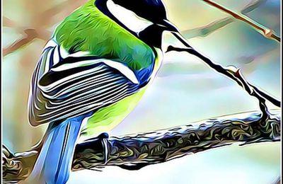 Les oiseaux - mésange charbonnière