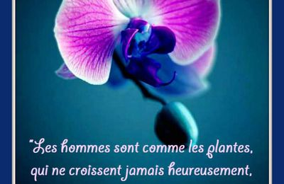 "Citation ""hommes"" de Montesquieu"