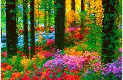Les couleurs en images