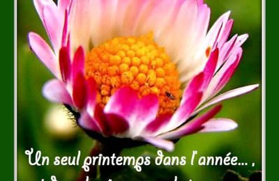 "Citation ""printemps"" de Simone de Beauvoir"