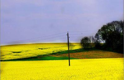 La campagne au printemps - Louvatange - Jura