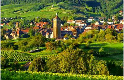 Arbois - Jura - les vignes