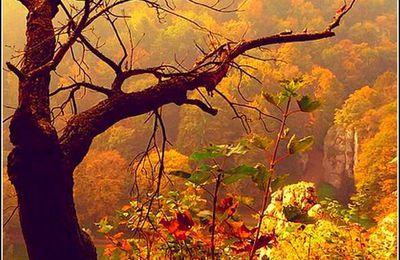 Forêts en images