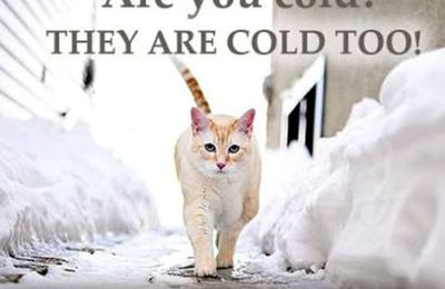 Bring your pets inside