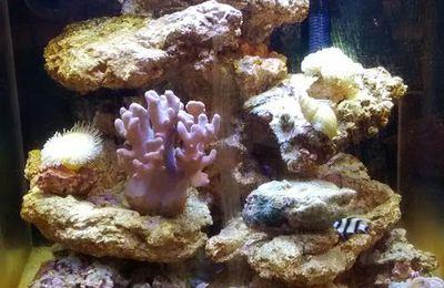 Quelques nouvelles rapides de notre aquarium