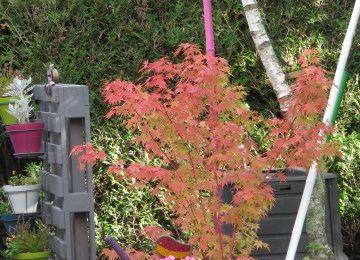 Le jardin commence à changer de couleurs