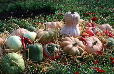 Halloween, le bal des citrouilles et des courges d'automne