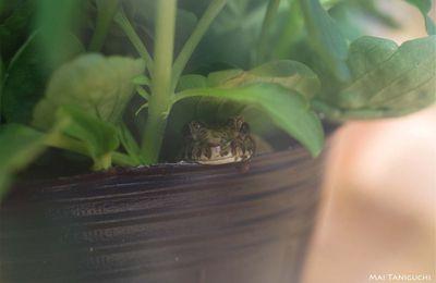 La petite grenouille en hiver