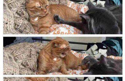 Humour : quand il verifie si t'es encore énervée
