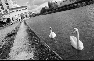 Partie de pêche autour de la Villette...