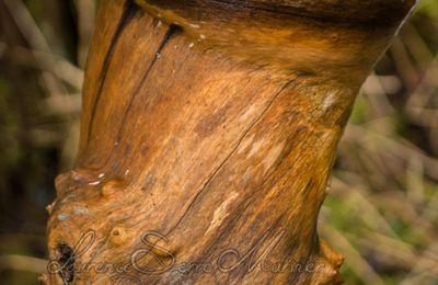 Un arbre qui est sur la rotule ...