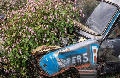 Vieille Renault 5 qui sert de pot de fleur ...