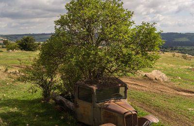 Le Citroen P23 arbustif