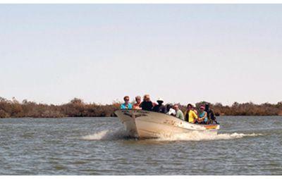 Les Pélicans du Djoudj - Sénégal