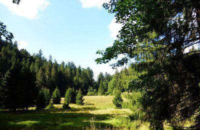 Hautes-Vosges : SQUAINFAING (alt. 851 m) - 04 - .