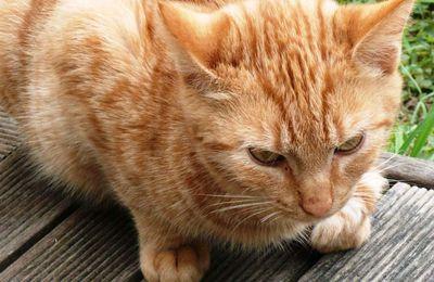 Tout ce que vous avez toujours voulu savoir sur votre chat sans oser lui demander !