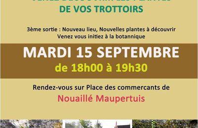 Sauvages de ma rue en Poitou