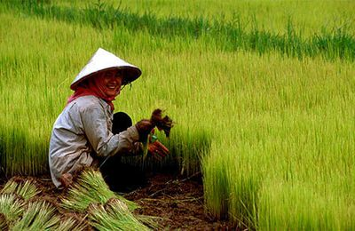 The land reforms and agriculture in China
