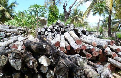 Madagascar: l'écologiste Razafimalala condamné à 5 ans de prison avec sursis