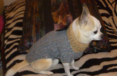 Tuto pull chihuahua argenté et doré