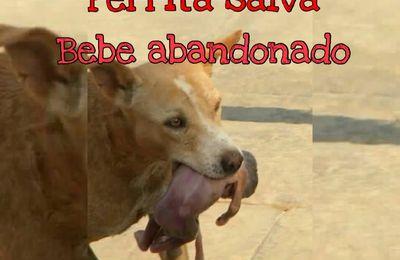 Perro salva la vida de un bebé recién nacido que fue tirado a la Basura por su mala madre
