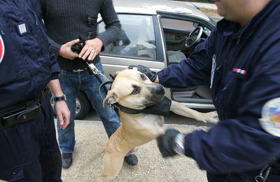 «Police de Bisounours» : la police de proximité 2.0 de Gérard Collomb fraîchement accueillie