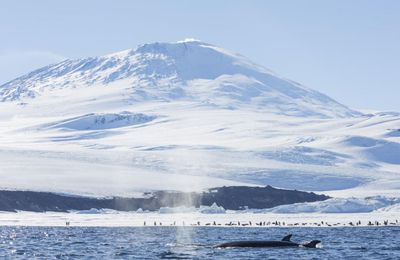 La calotte glaciaire de l'Antarctique occidental abrite une centaine de volcans