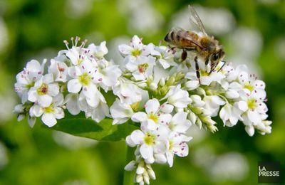 Les pesticides seraient mortels pour les abeilles, les oiseaux et les poissons